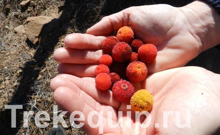 Плоды Artubus в руках